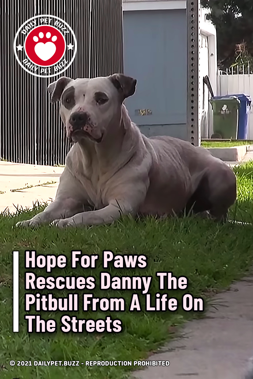 Hope For Paws Rescues Danny The Pitbull From A Life On The Streets