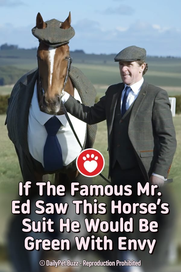 If The Famous Mr. Ed Saw This Horse\'s Suit He Would Be Green With Envy