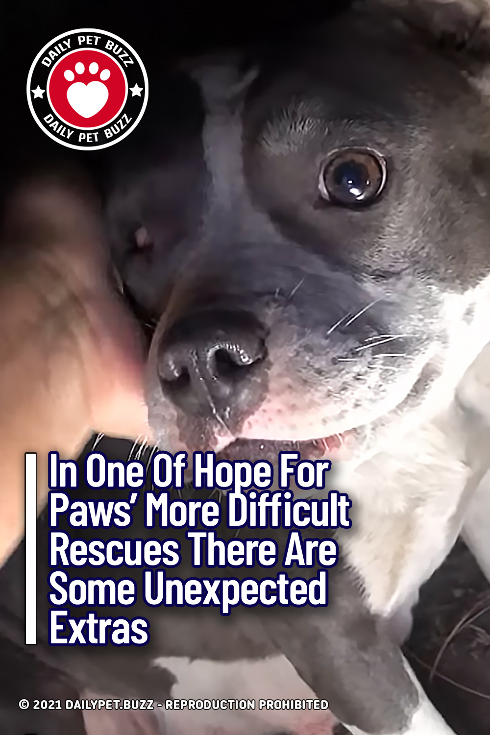 In One Of Hope For Paws\' More Difficult Rescues There Are Some Unexpected Extras
