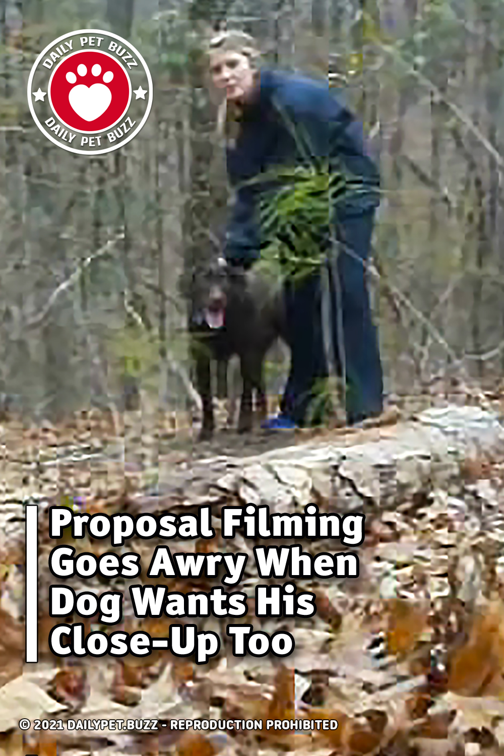 Proposal Filming Goes Awry When Dog Wants His Close-Up Too