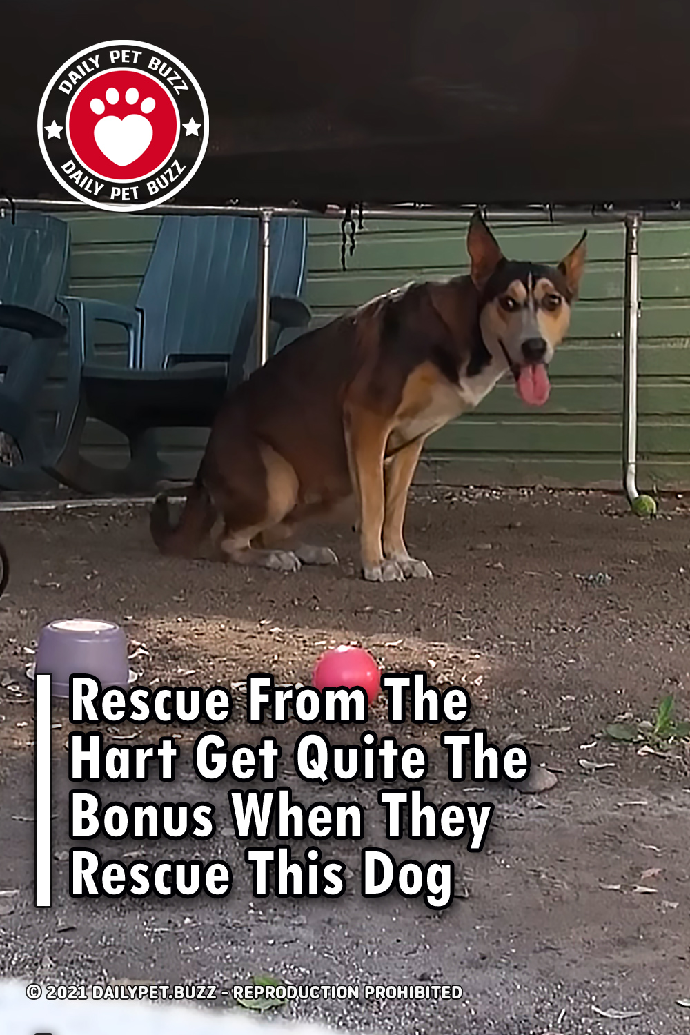 Rescue From The Hart Get Quite The Bonus When They Rescue This Dog