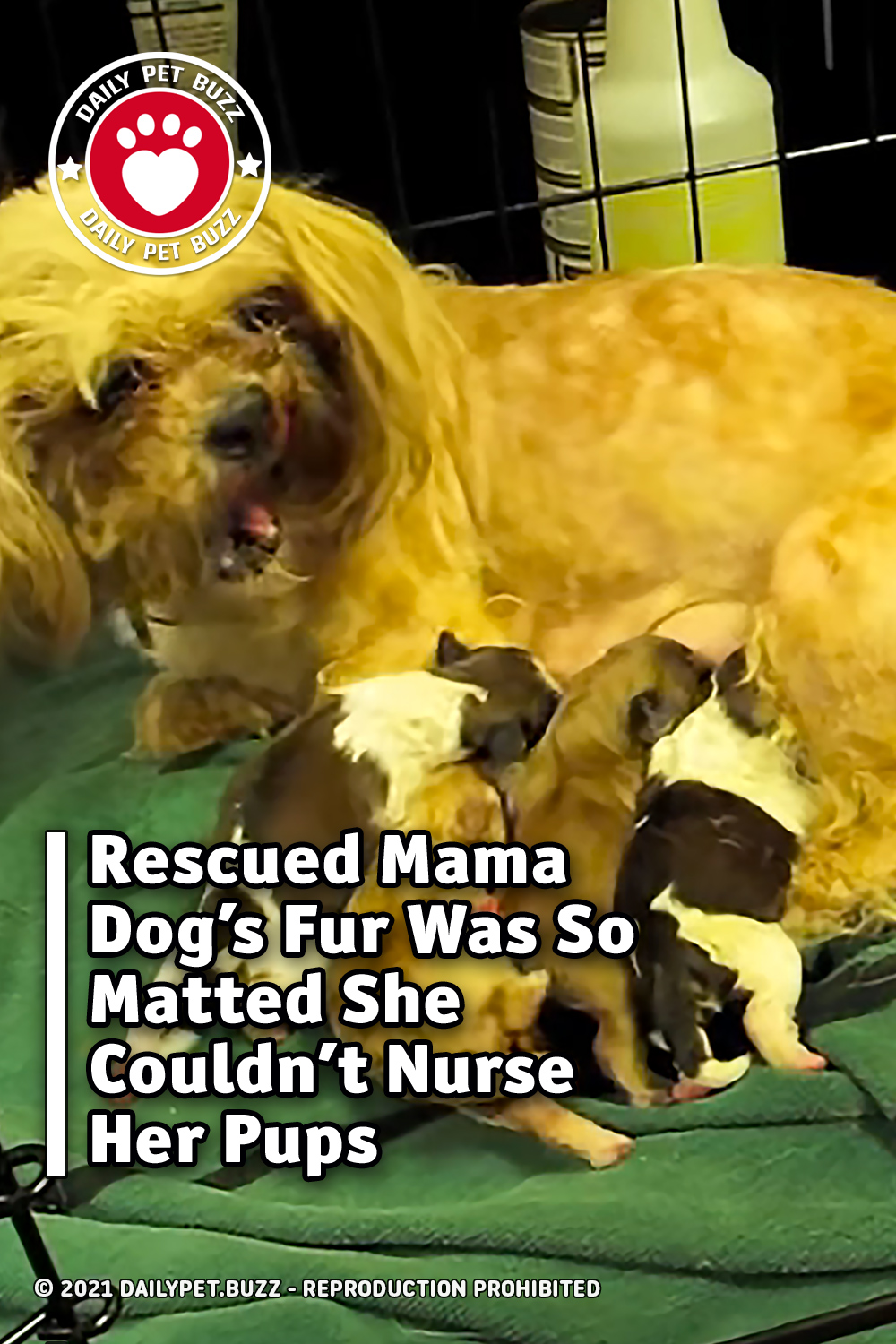 Rescued Mama Dog\'s Fur Was So Matted She Couldn\'t Nurse Her Pups