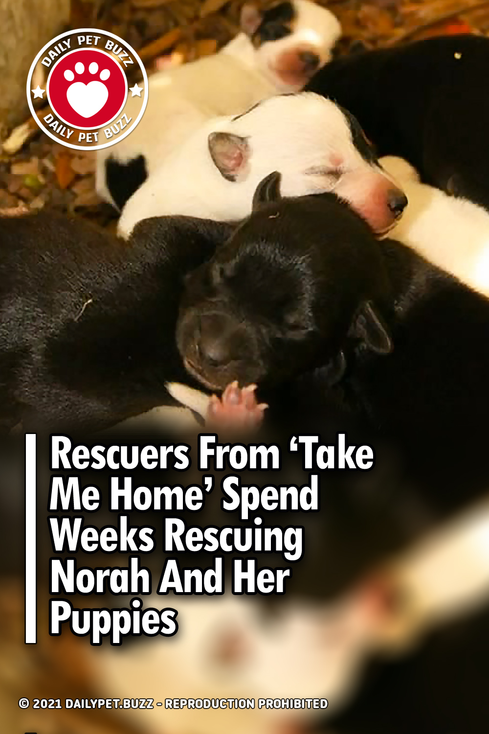 Rescuers From \'Take Me Home\' Spend Weeks Rescuing Norah And Her Puppies