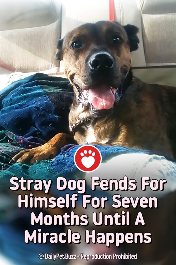 Stray Dog Fends For Himself For Seven Months Until A Miracle Happens
