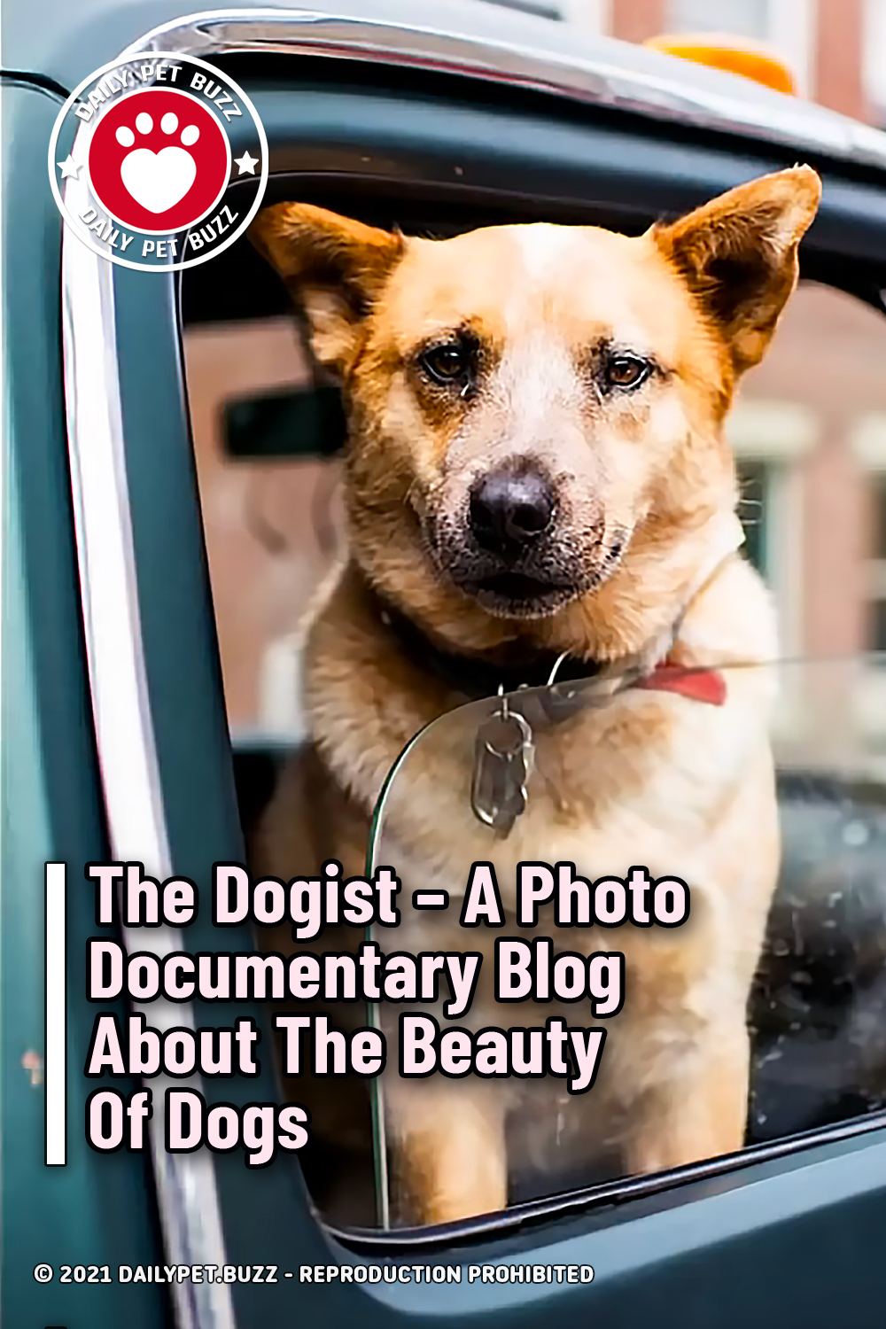 The Dogist – A Photo Documentary Blog About The Beauty Of Dogs