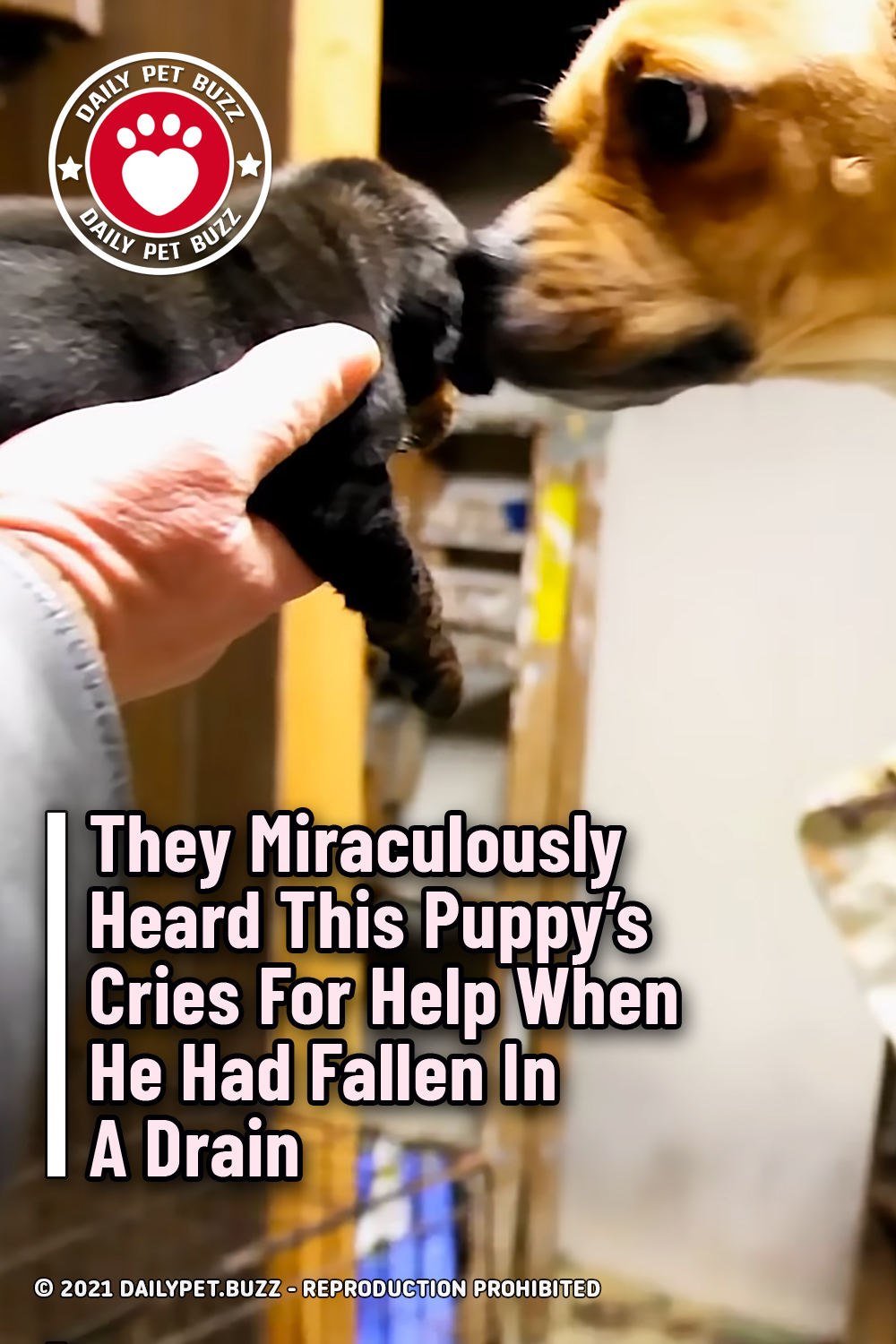 They Miraculously Heard This Puppy\'s Cries For Help When He Had Fallen In A Drain