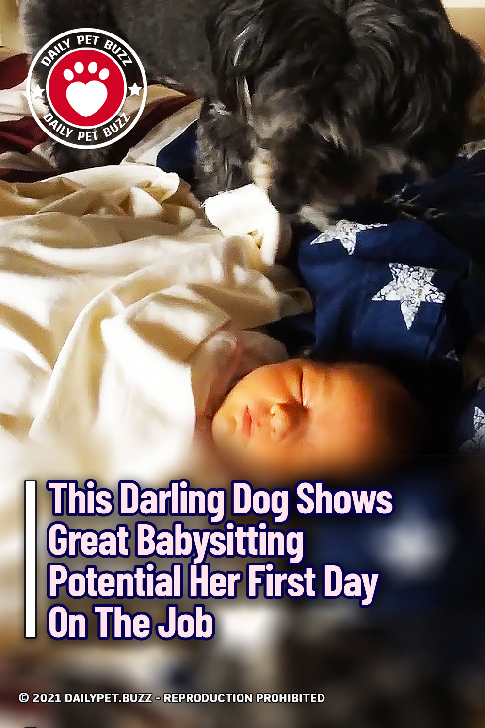 This Darling Dog Shows Great Babysitting Potential Her First Day On The Job