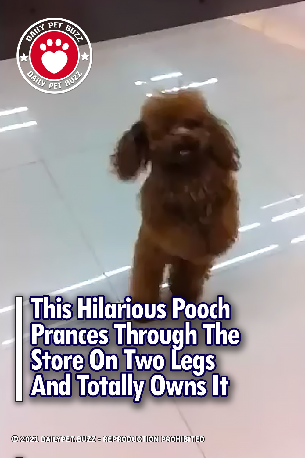 This Hilarious Pooch Prances Through The Store On Two Legs And Totally Owns It