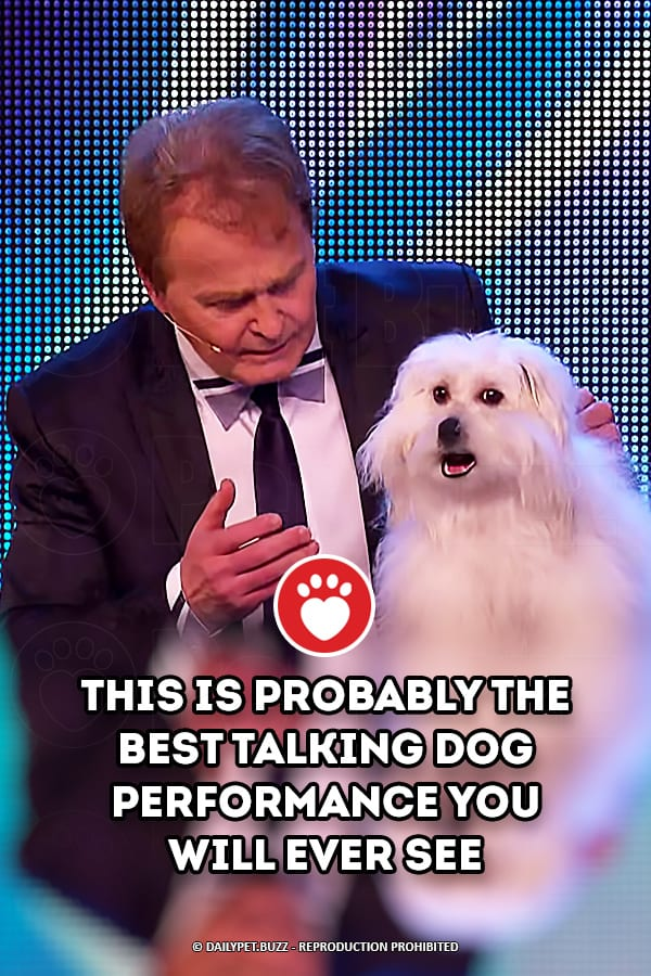 This Is Probably The Best Talking Dog Performance You Will Ever See
