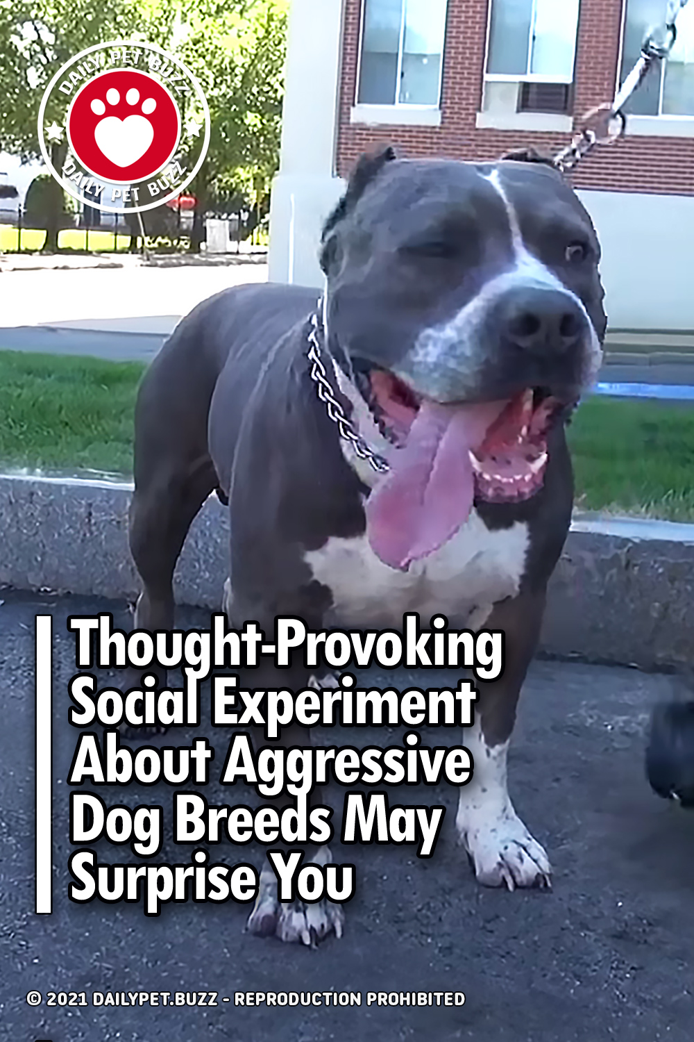 Thought-Provoking Social Experiment About Aggressive Dog Breeds May Surprise You