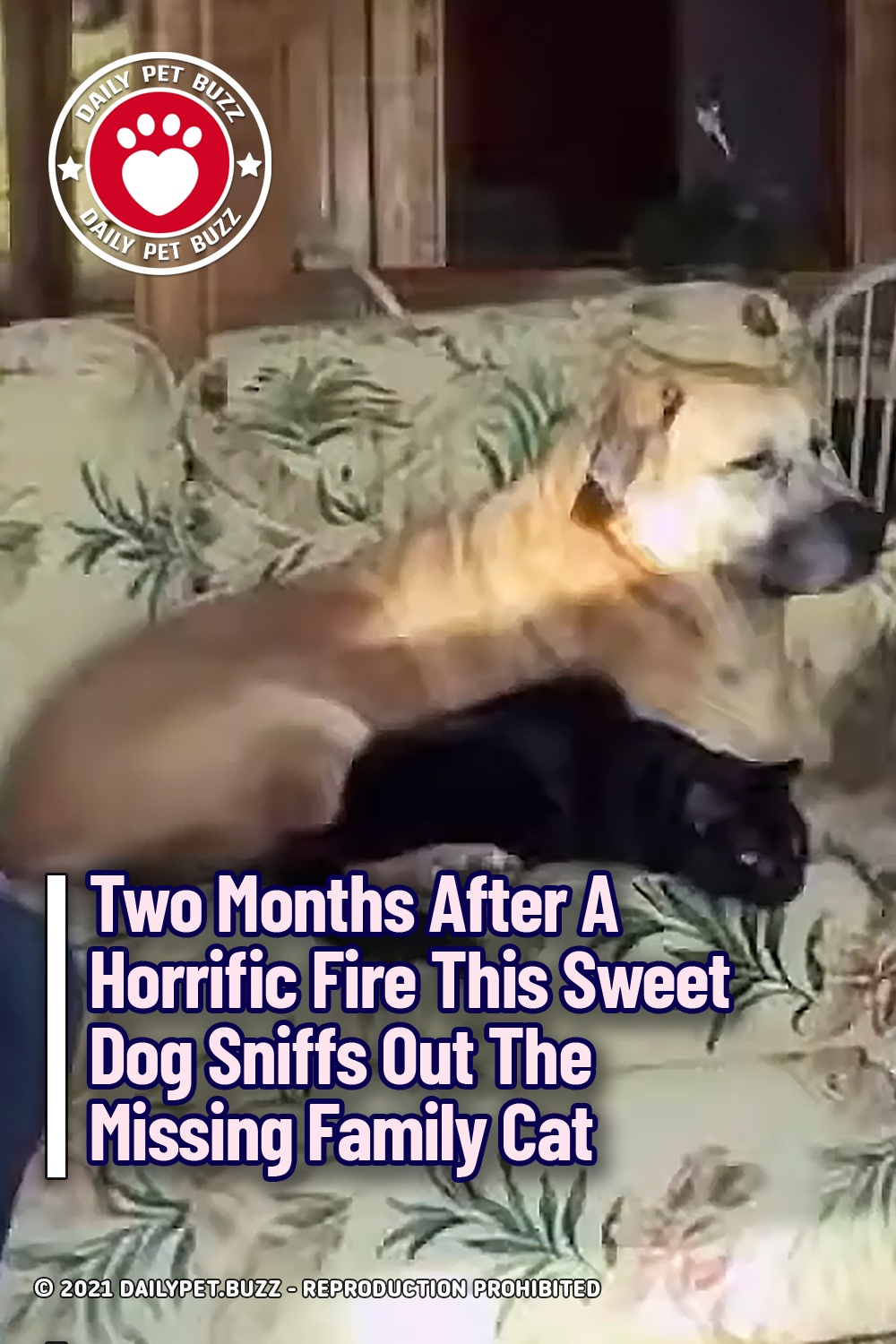 Two Months After A Horrific Fire This Sweet Dog Sniffs Out The Missing Family Cat