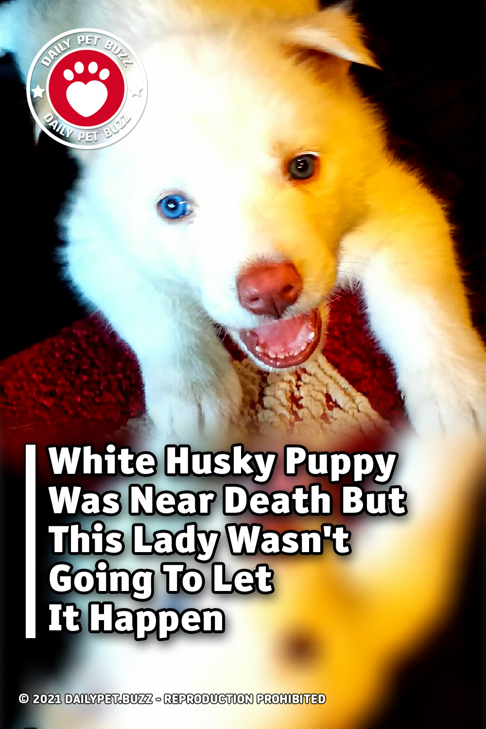 White Husky Puppy Was Near Death But This Lady Wasn\'t Going To Let It Happen
