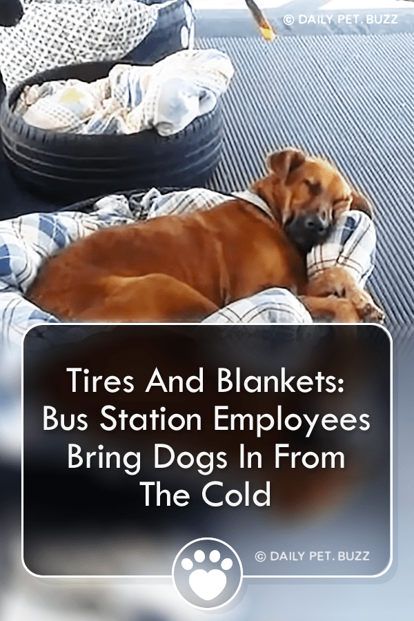 Tires And Blankets: Bus Station Employees Bring Dogs In From The Cold