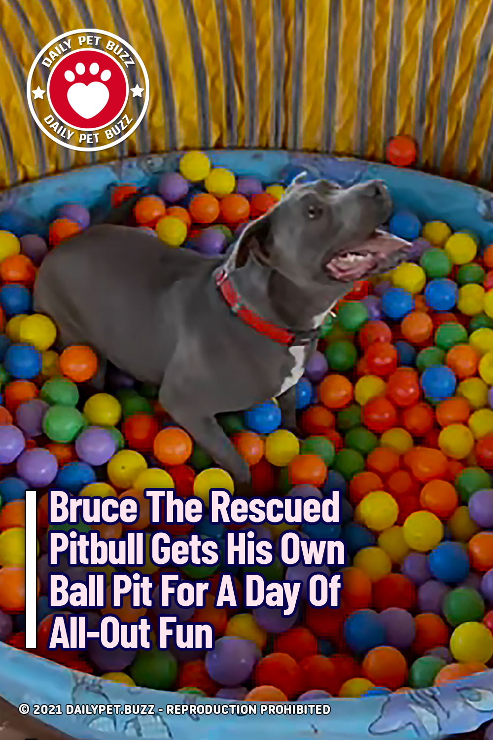Bruce The Rescued Pitbull Gets His Own Ball Pit For A Day Of All-Out Fun