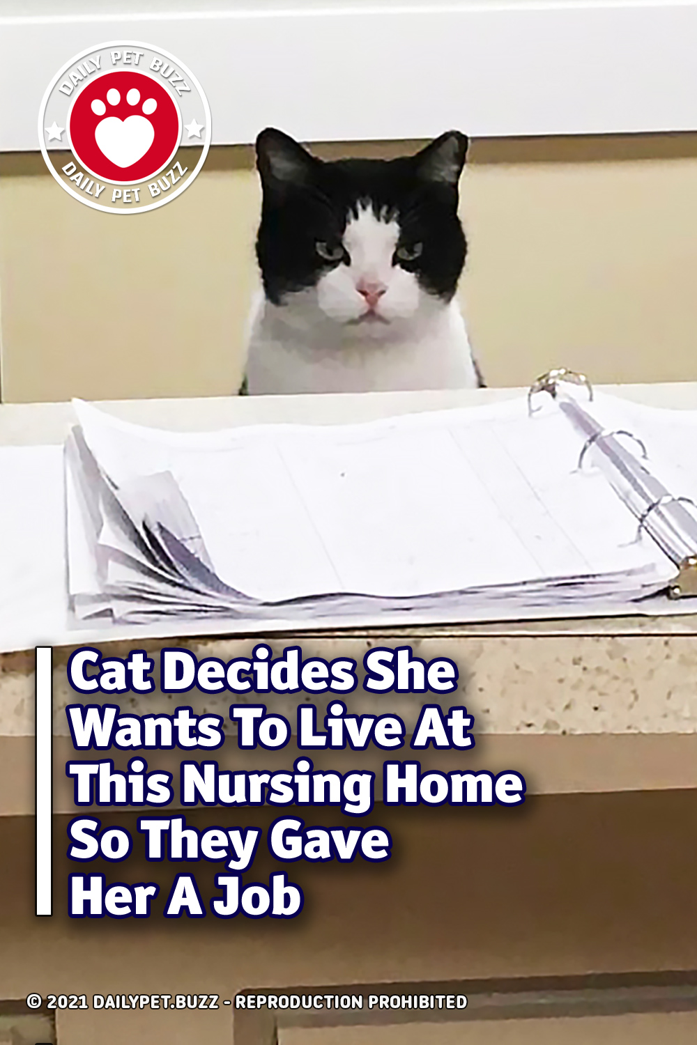 Cat Decides He Wants To Live At This Nursing Home So They Gave Her A Job