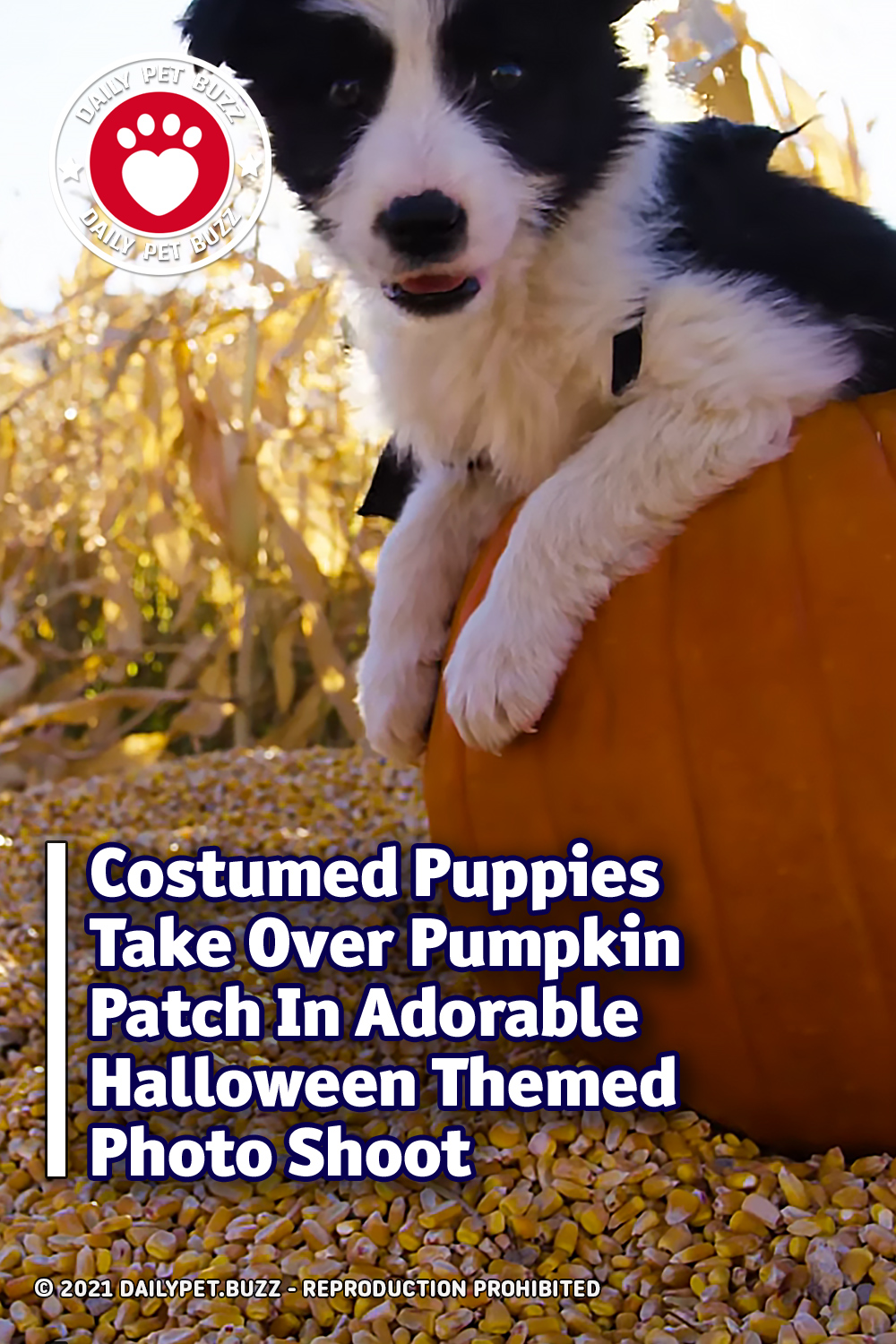 Costumed Puppies Take Over Pumpkin Patch In Adorable Halloween Themed Photo Shoot
