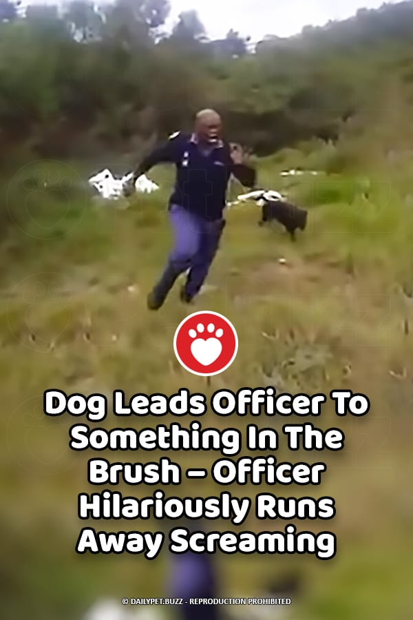 Dog Leads Officer To Something In The Brush – Officer Hilariously Runs Away Screaming