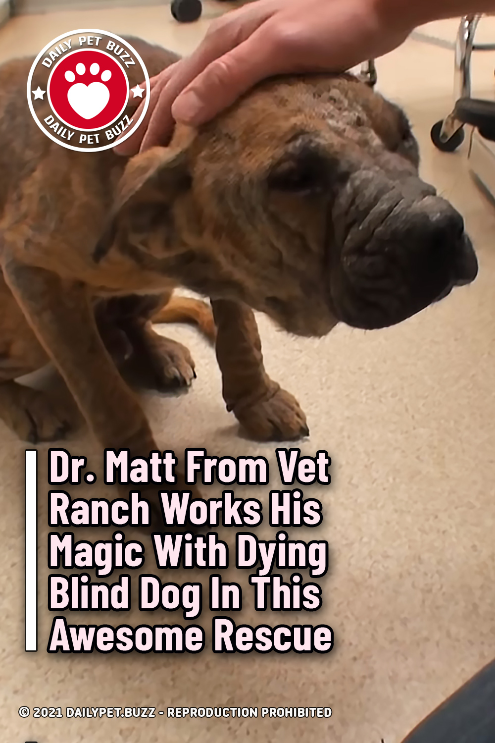Dr. Matt From Vet Ranch Works His Magic With Dying Blind Dog In This Awesome Rescue