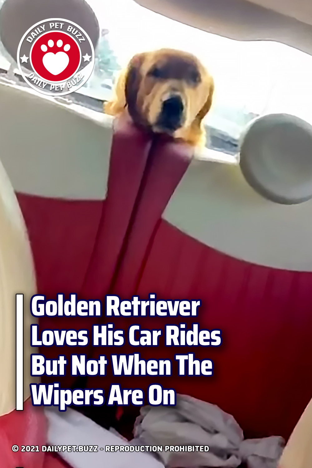 Golden Retriever Loves His Car Rides But Not When The Wipers Are On