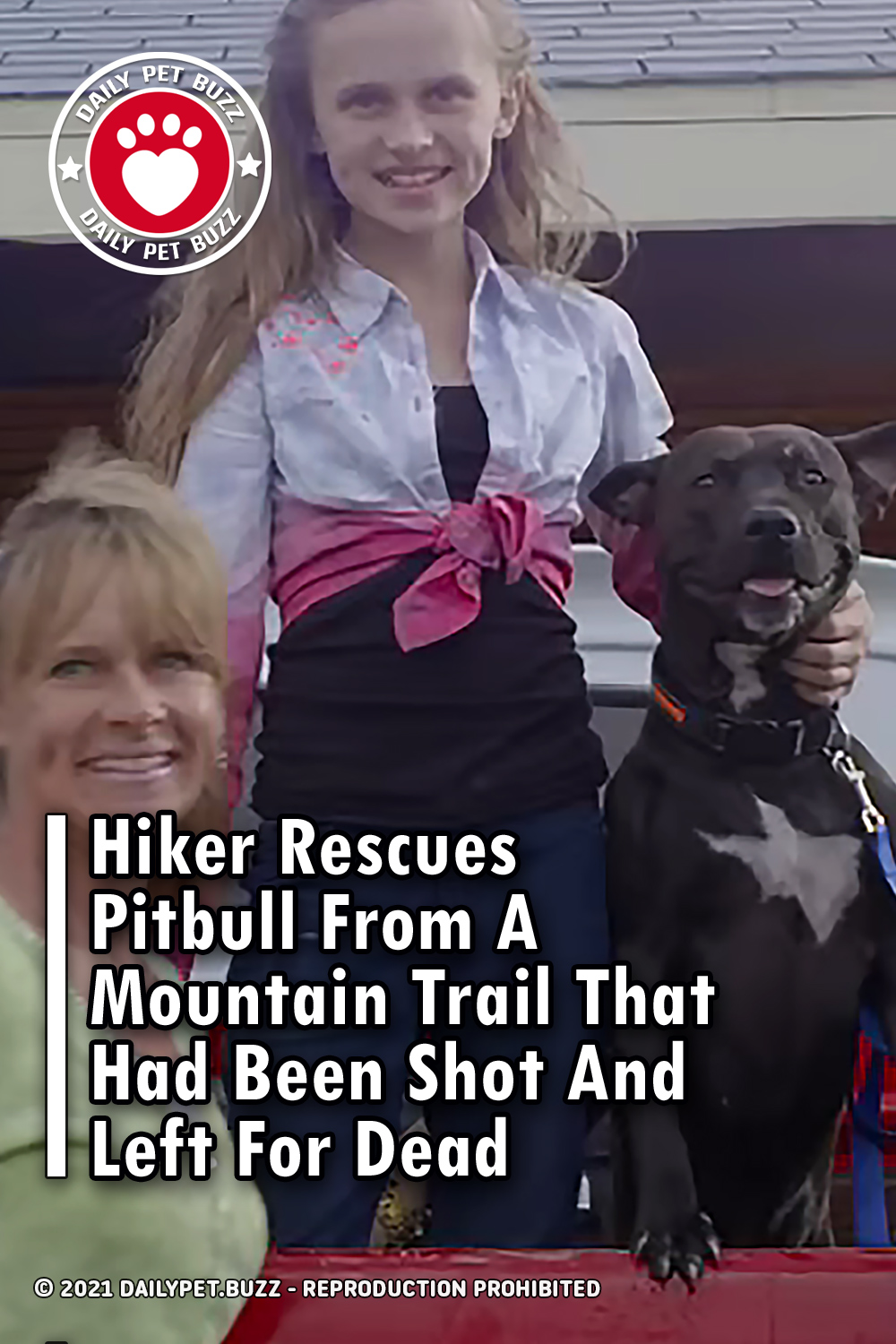 Hiker Rescues Pitbull From A Mountain Trail That Had Been Shot And Left For Dead