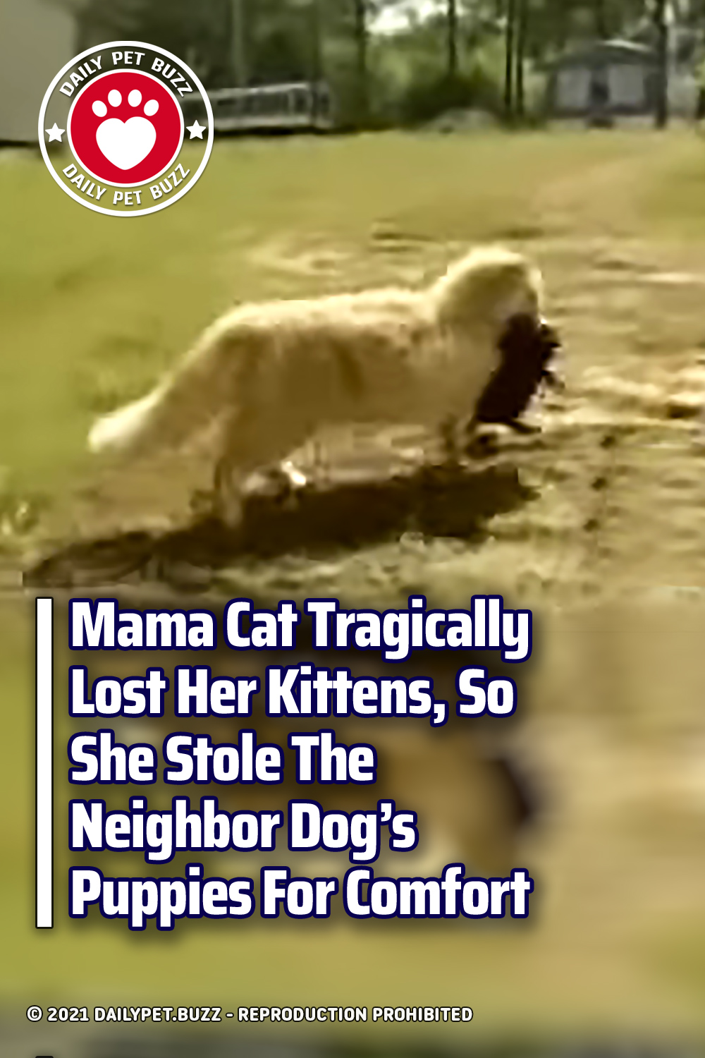 Mama Cat Tragically Lost Her Kittens, So She Stole The Neighbor Dog\'s Puppies For Comfort