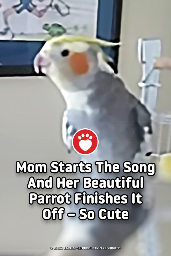 Mom Starts The Song And Her Beautiful Parrot Finishes It Off – So Cute
