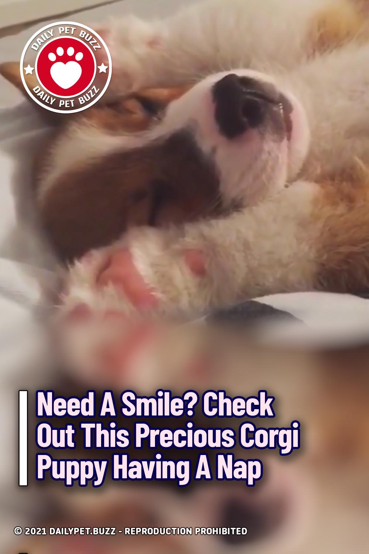 Need A Smile? Check Out This Precious Corgi Puppy Having A Nap