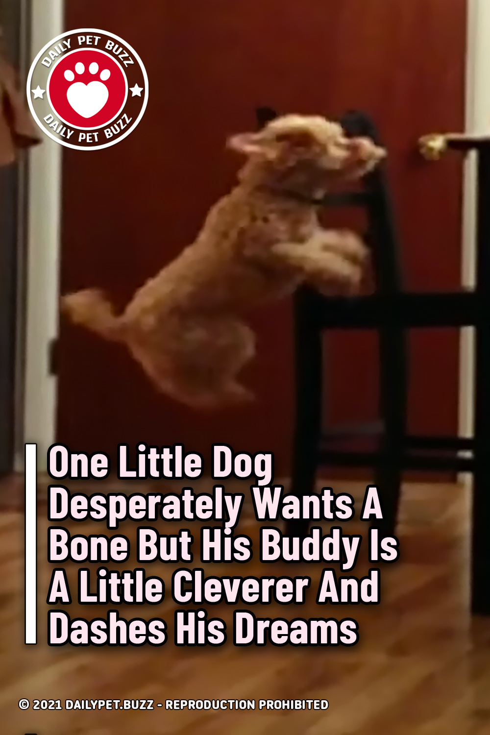 One Little Dog Desperately Wants A Bone But His Buddy Is A Little Cleverer And Dashes His Dreams