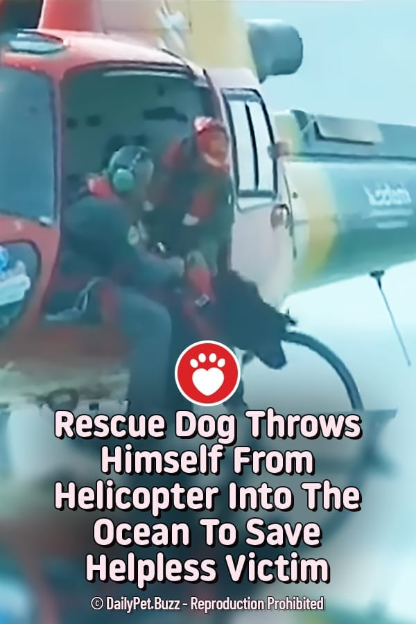 Rescue Dog Throws Himself From Helicopter Into The Ocean To Save Helpless Victim
