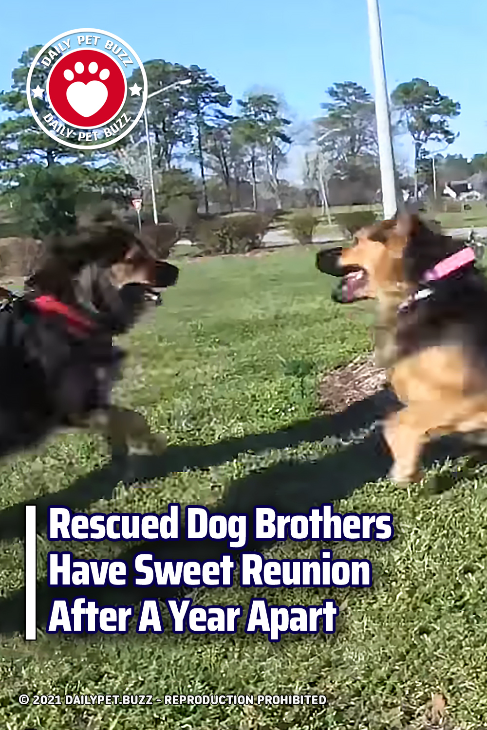 Rescued Dog Brothers Have Sweet Reunion After A Year Apart