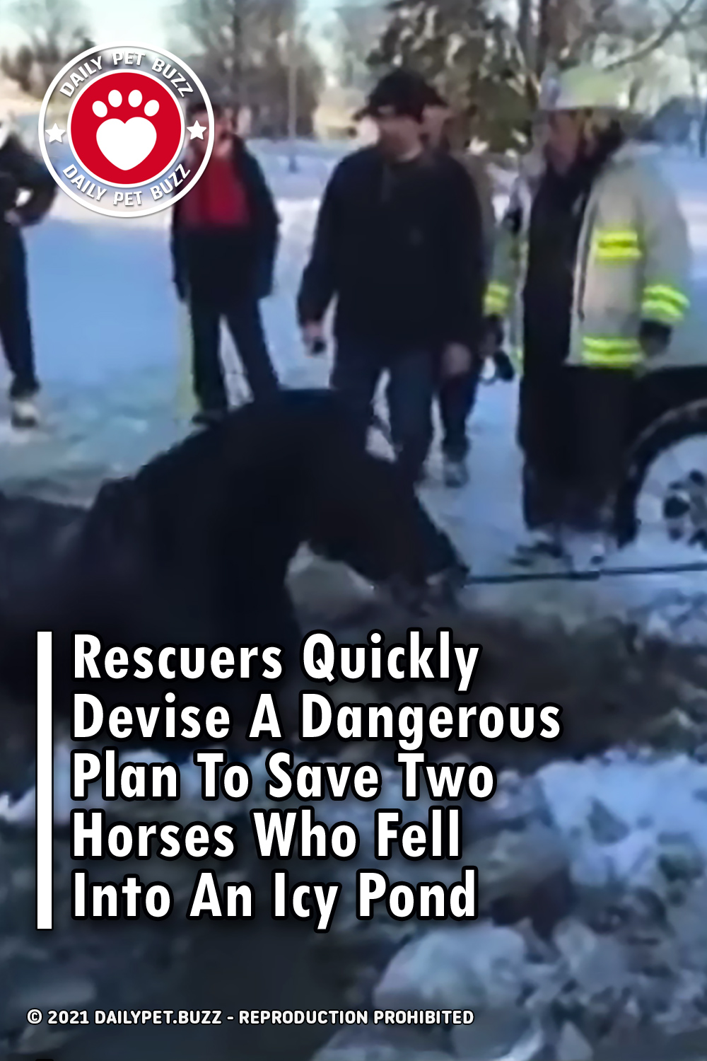 Rescuers Quickly Devise A Dangerous Plan To Save Two Horses Who Fell Into An Icy Pond