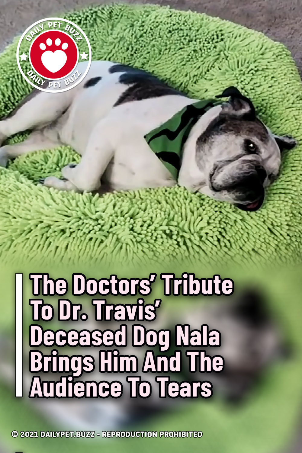 The Doctors\' Tribute To Dr. Travis\' Deceased Dog Nala Brings Him And The Audience To Tears