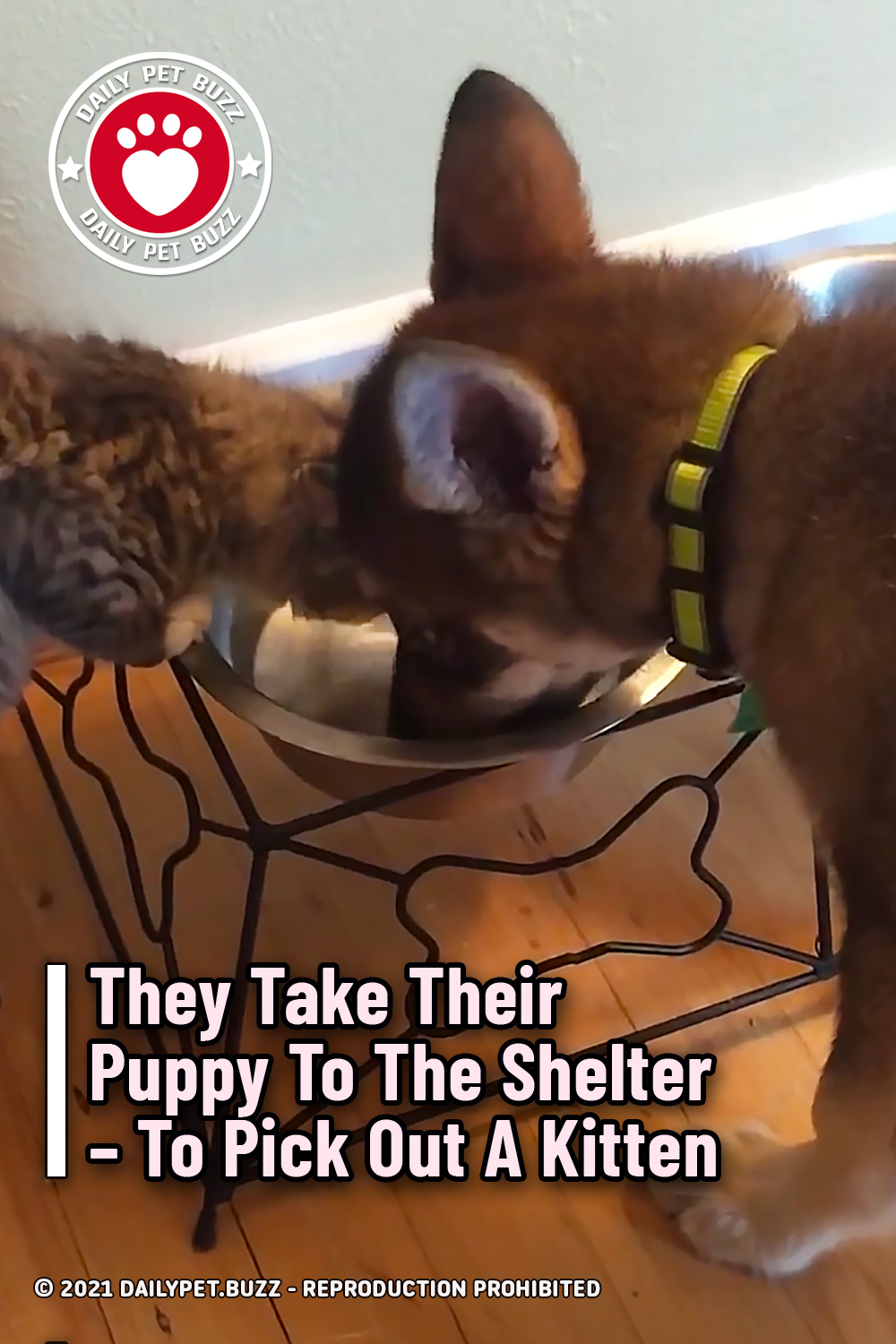 They Take Their Puppy To The Shelter – To Pick Out A Kitten