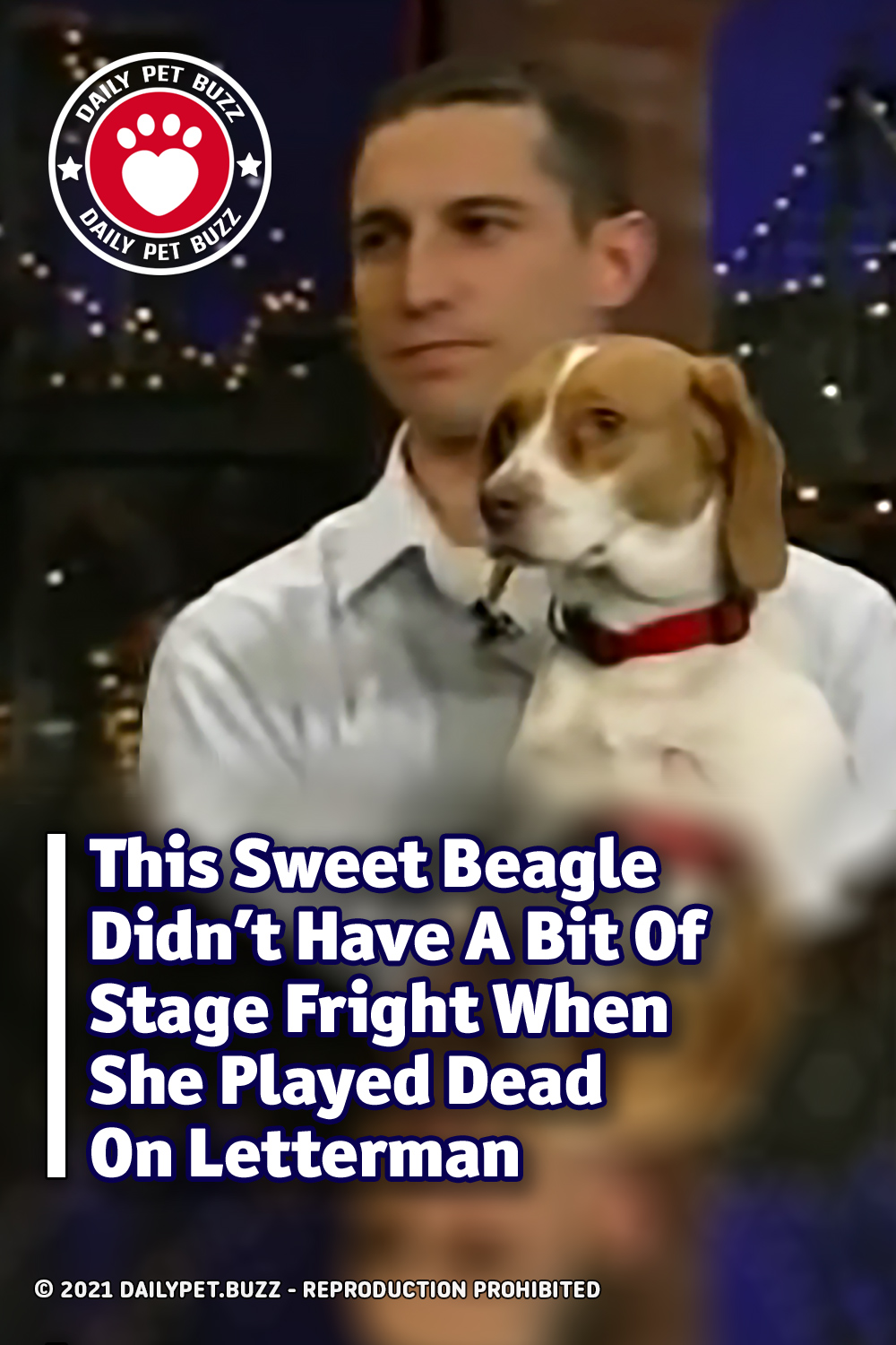 This Sweet Beagle Didn\'t Have A Bit Of Stage Fright When She Played Dead On Letterman