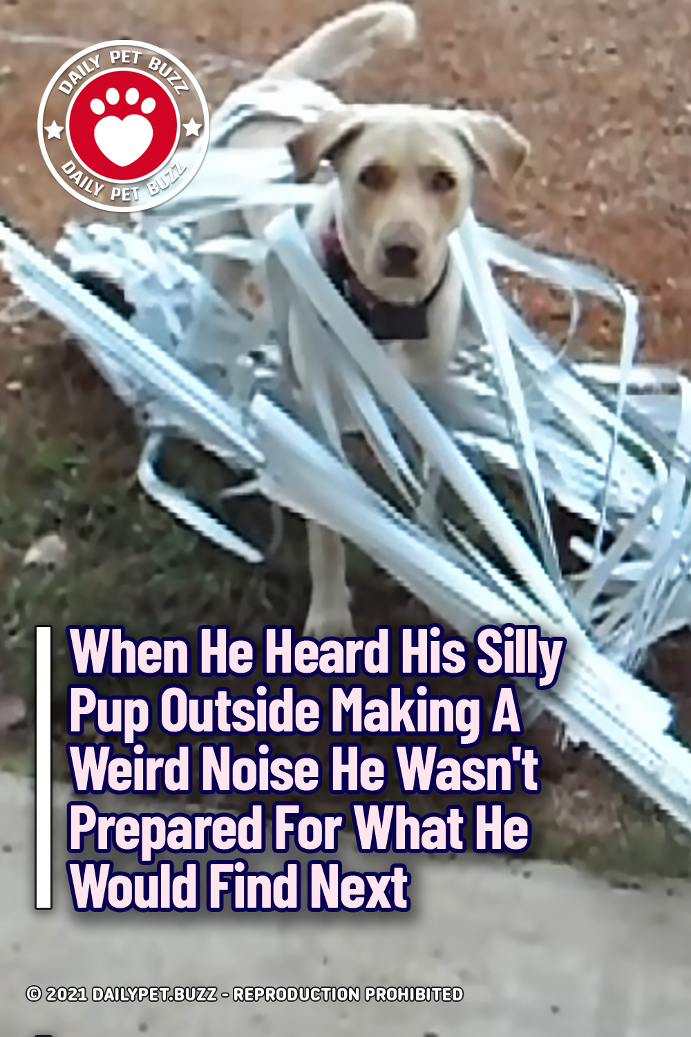 When He Heard His Silly Pup Outside Making A Weird Noise He Wasn\'t Prepared For What He Would Find Next