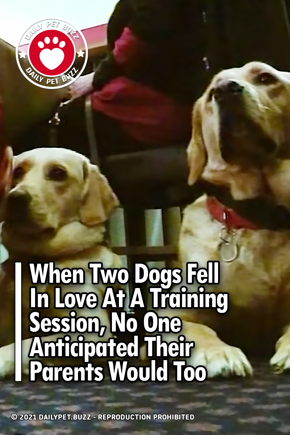 When Two Dogs Fell In Love At A Training Session, No One Anticipated Their Parents Would Too