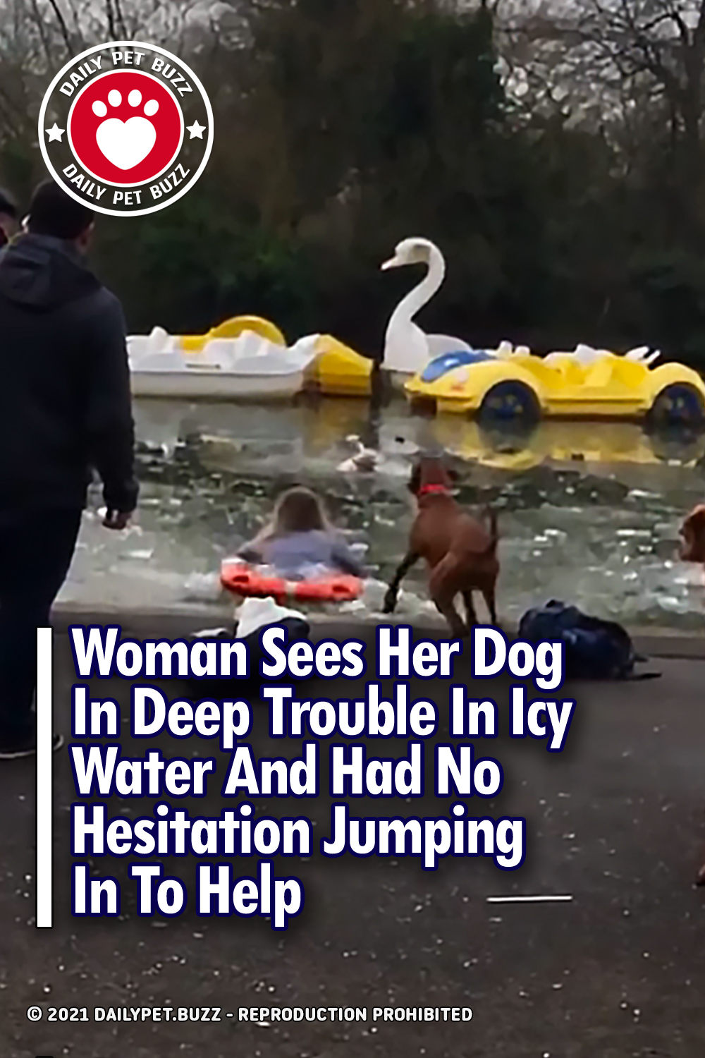 Woman Sees Her Dog In Deep Trouble In Icy Water And Had No Hesitation Jumping In To Help