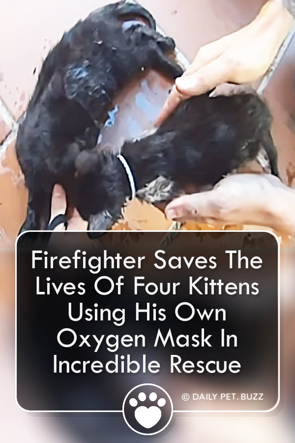 Firefighter Saves The Lives Of Four Kittens Using His Own Oxygen Mask In Incredible Rescue