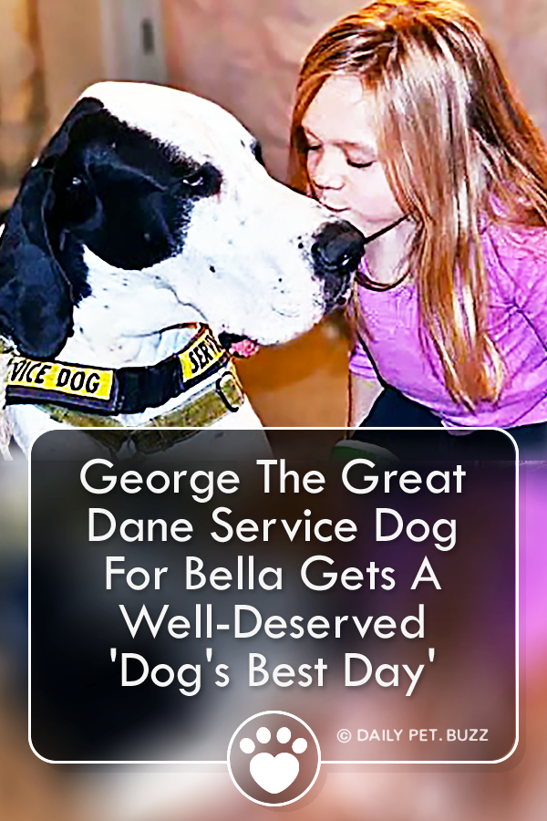 George The Great Dane Service Dog For Bella Gets A Well-Deserved \'Dog\'s Best Day\'