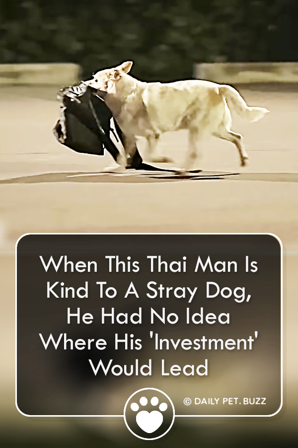 When This Thai Man Is Kind To A Stray Dog, He Had No Idea Where His \'Investment\' Would Lead