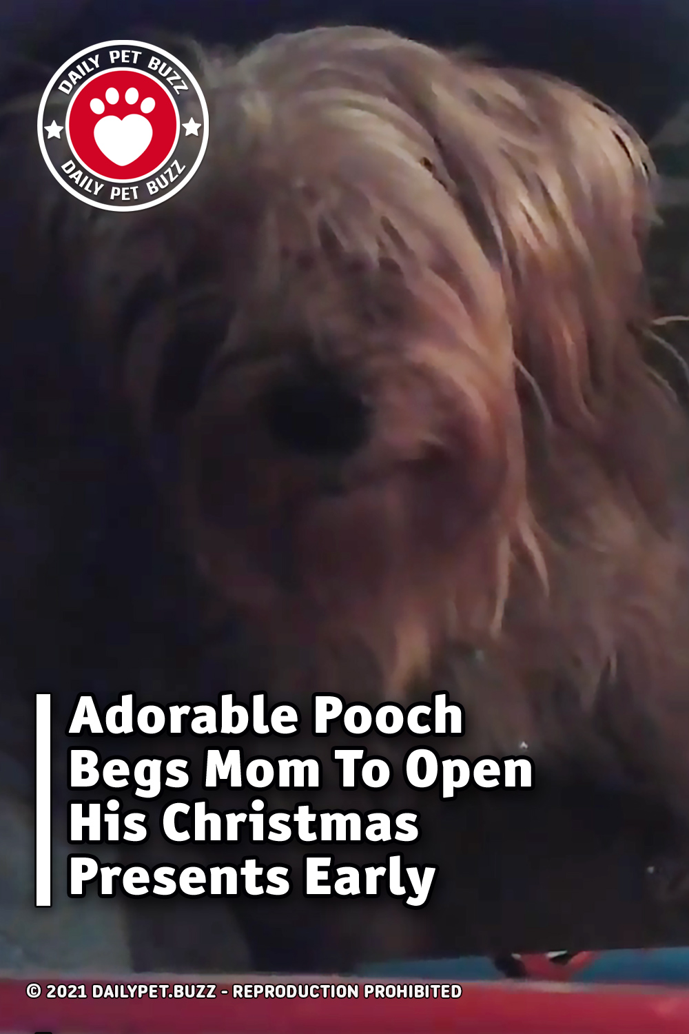 Adorable Pooch Begs Mom To Open His Christmas Presents Early