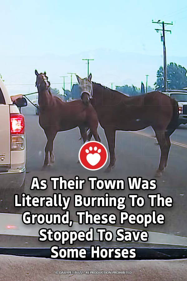 As Their Town Was Literally Burning To The Ground, These People Stopped To Save Some Horses