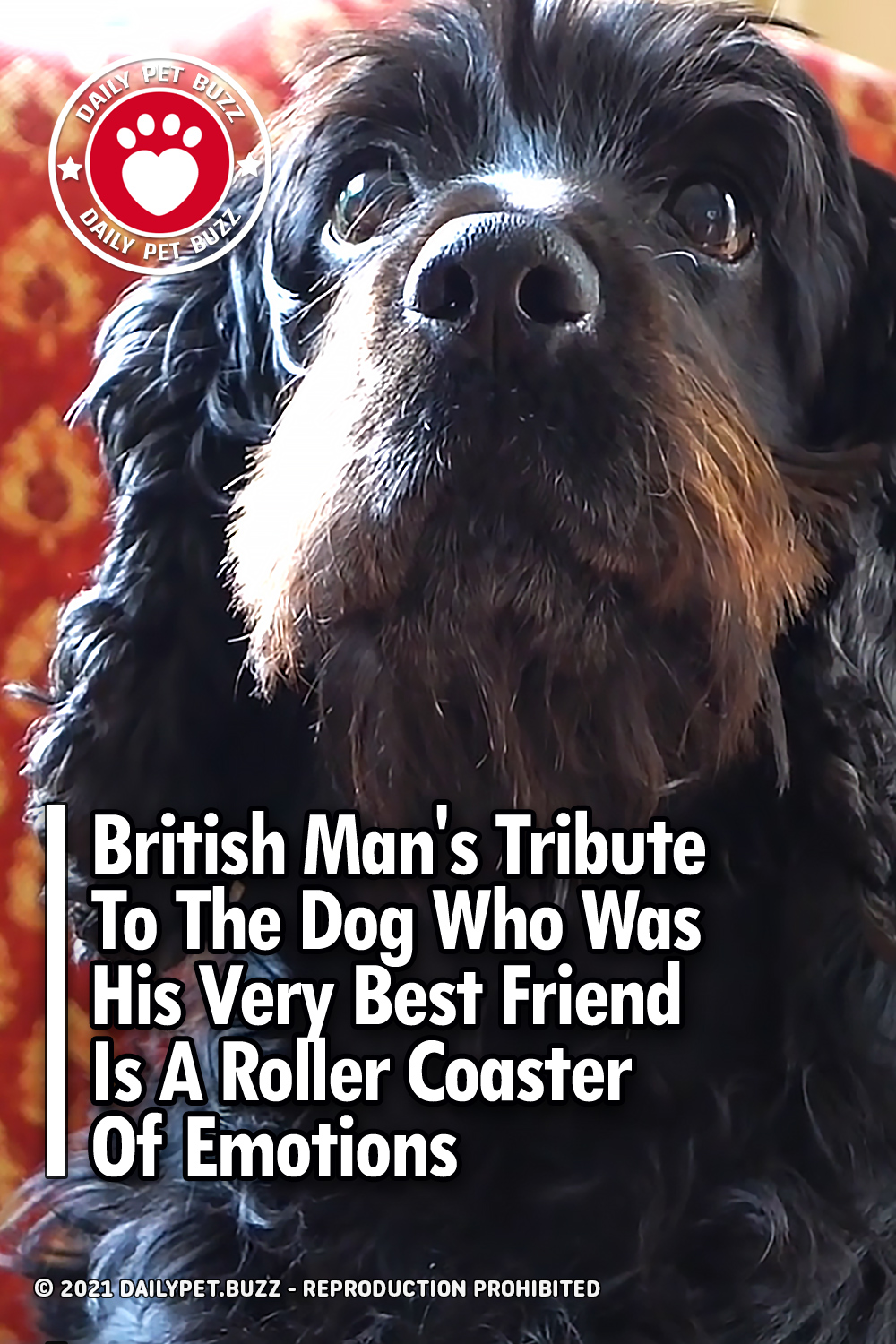 British Man\'s Tribute To The Dog Who Was His Very Best Friend Is A Roller Coaster Of Emotions