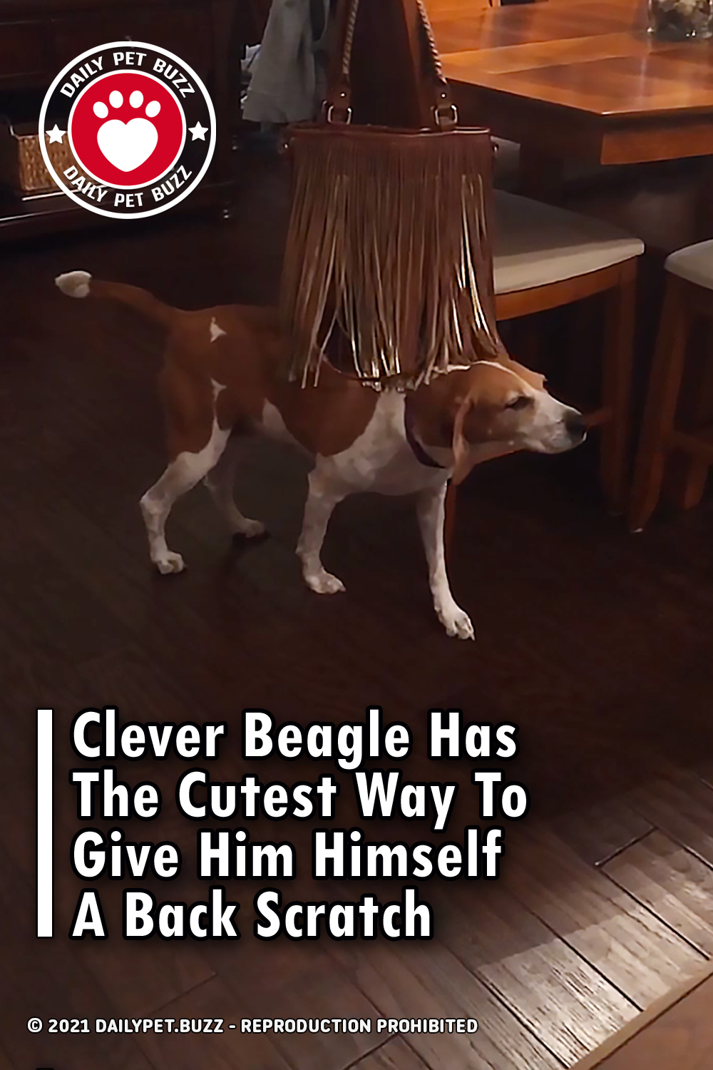 Clever Beagle Has The Cutest Way To Give Him Himself A Back Scratch