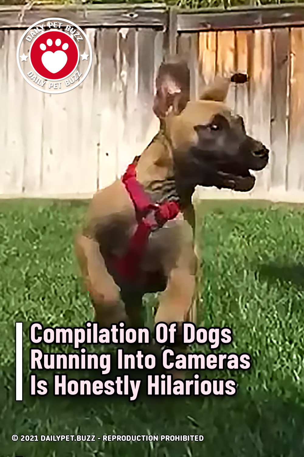 Compilation Of Dogs Running Into Cameras Is Honestly Hilarious