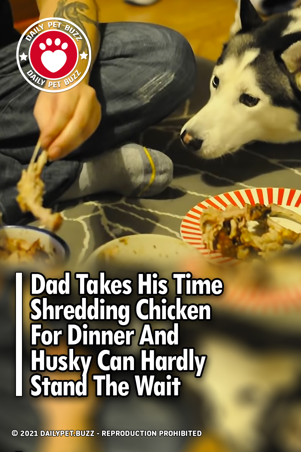Dad Takes His Time Shredding Chicken For Dinner And Husky Can Hardly Stand The Wait