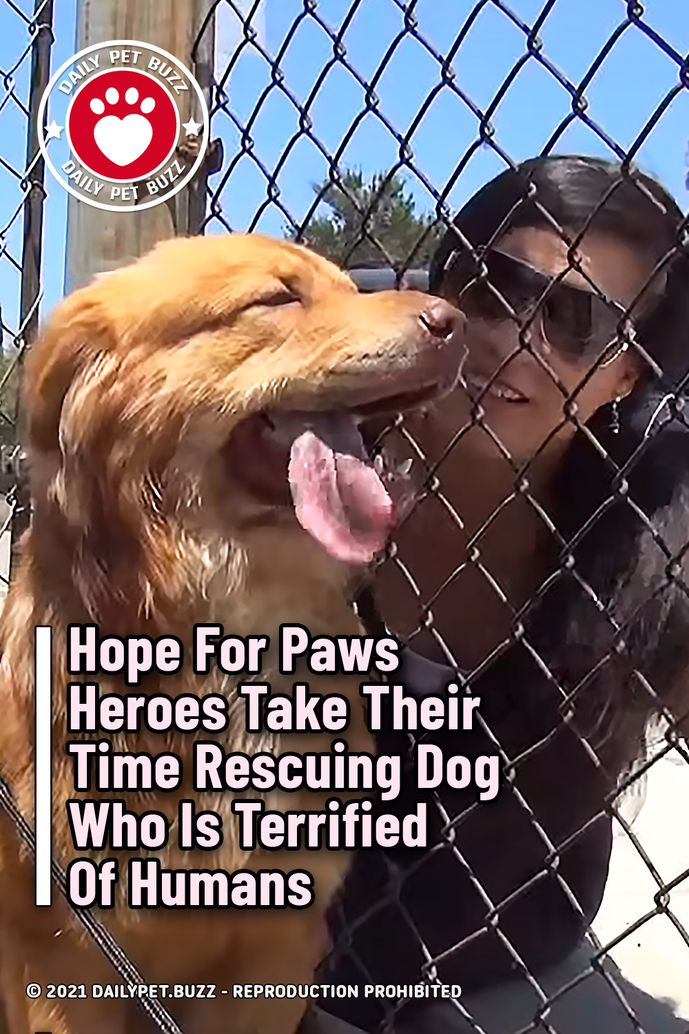 Hope For Paws Heroes Take Their Time Rescuing Dog Who Is Terrified Of Humans