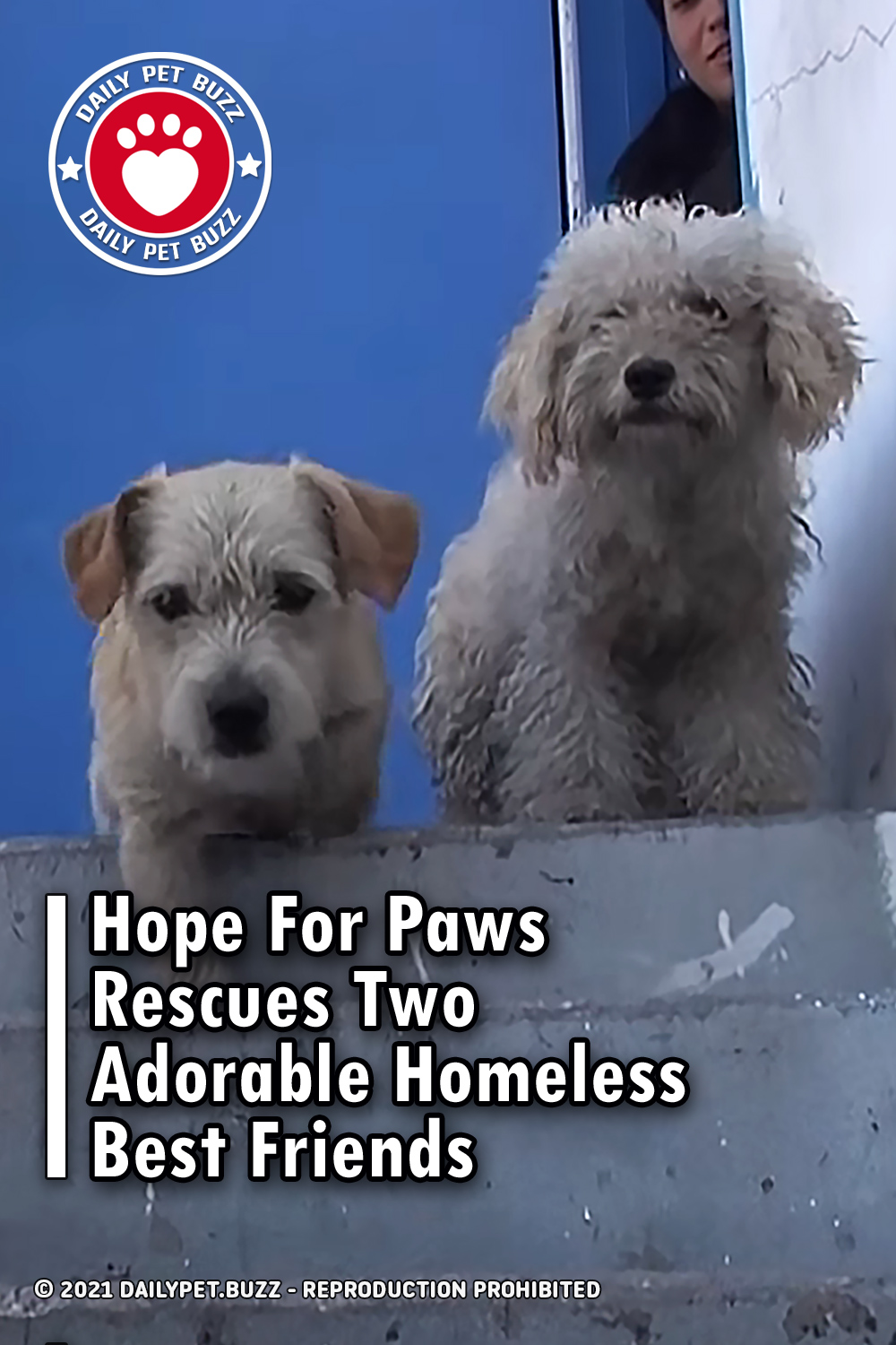 Hope For Paws Rescues Two Adorable Homeless Best Friends