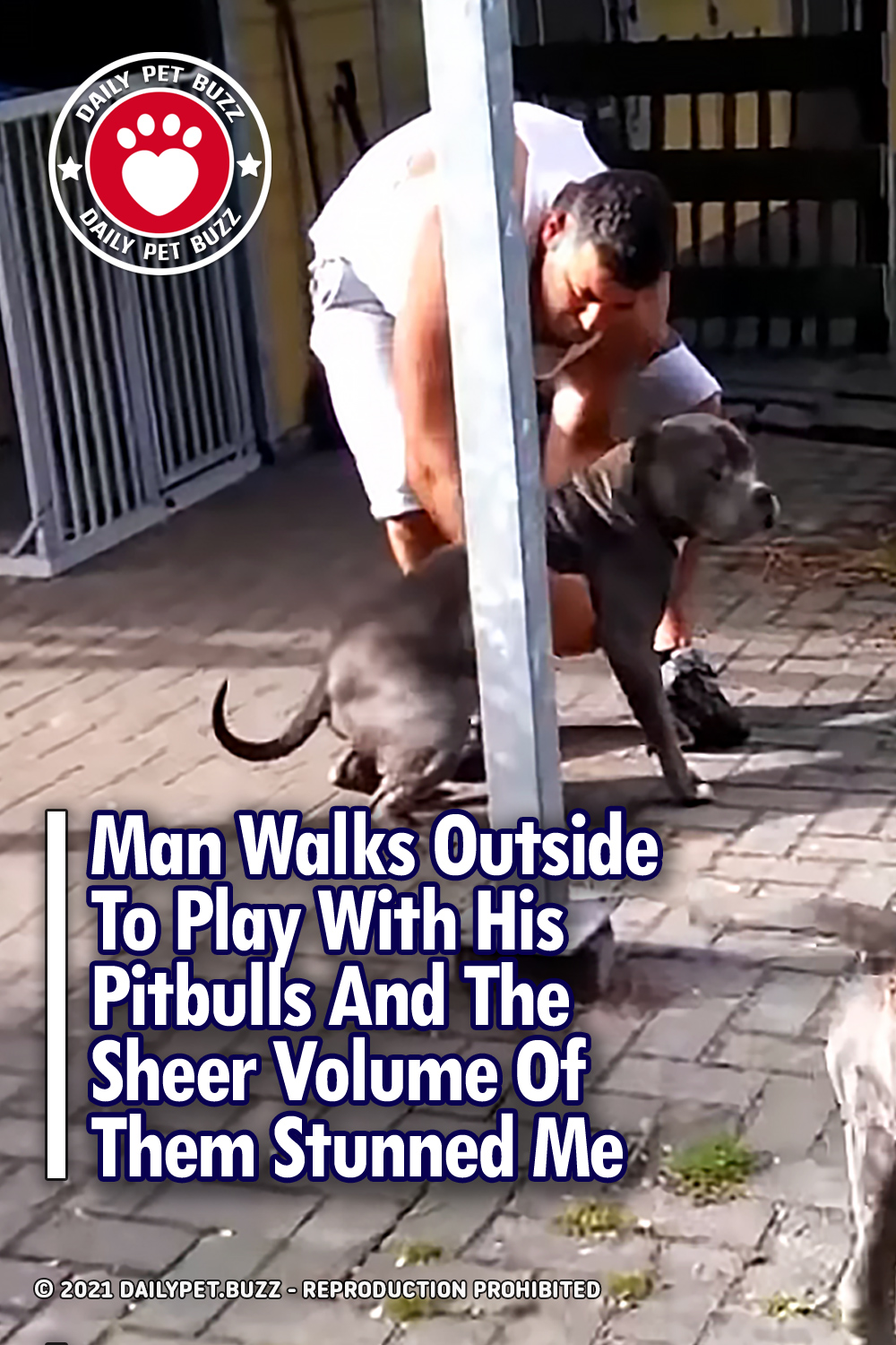 Man Walks Outside To Play With His Pitbulls And The Sheer Volume Of Them Stunned Me