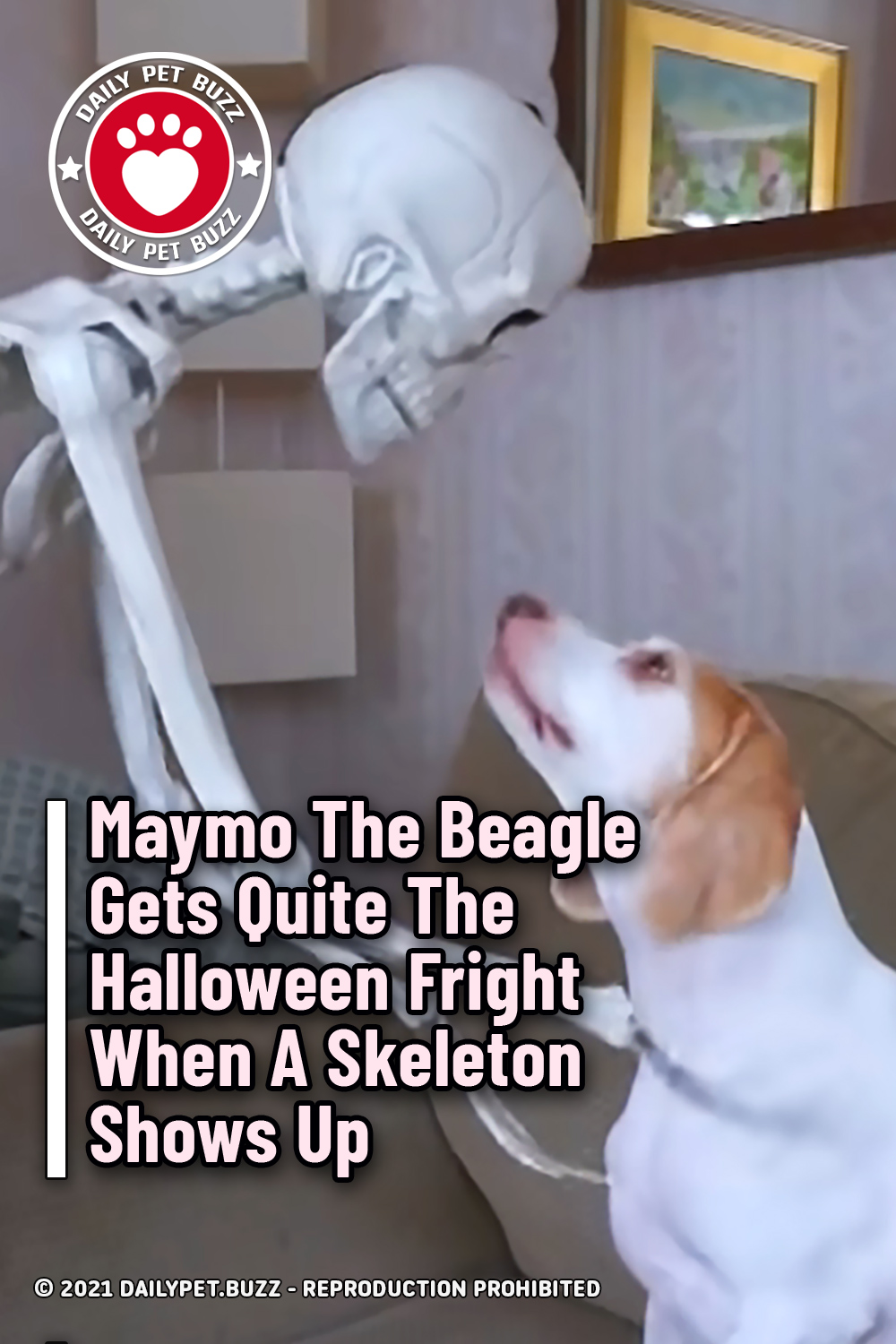 Maymo The Beagle Gets Quite The Halloween Fright When A Skeleton Shows Up